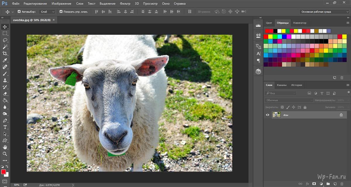 фотка овечки